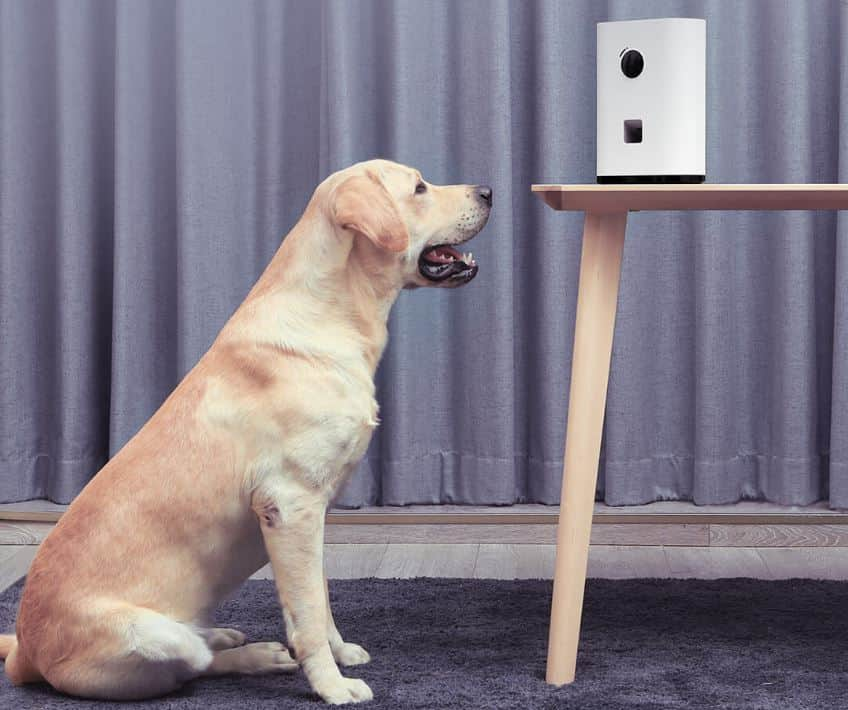 Pawbyy Smart Pet Snack Machine